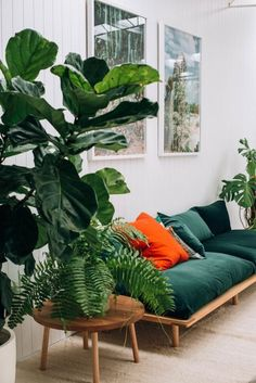 green velvet sofa with a large plant