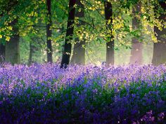 Beautiful Purple; Don't I Wish!