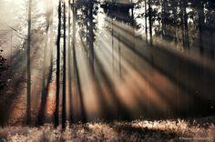 Licht wald  nebel