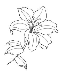 Flower Drawings Ideas Lilium flower coloring pages for kids, printable free Lilly Flower Drawing, Lilies Drawing, Lily Flower Tattoos, Flower Line Drawings, Flower Sketches, Flower Art, Art Drawings, Drawing Flowers, Flower Bouquet Drawing