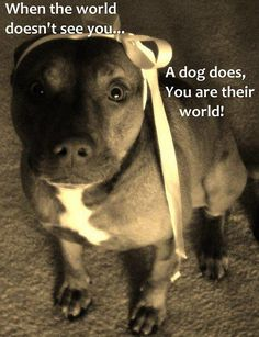 """so true..."" A #dog sees you when the world doesn't"