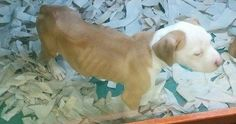 Petition · Surrender Malnourished Dogs to the Humane Society · Change.org PLEASE PLEASE JUST TAP ON THE PIC AND SIGN