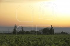 Sunset over a vineyard  by Porto Sabbia   Item #3776399