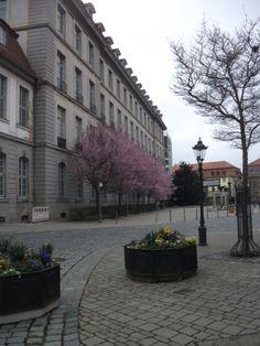 Ansbach, Residenz der Markgrafen Seitentrakt, im Frühling mit Blick in Richtung Schlossplatz