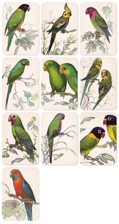 Parrots Drawings by N. Albova. Set of 10 by RussianSoulVintage