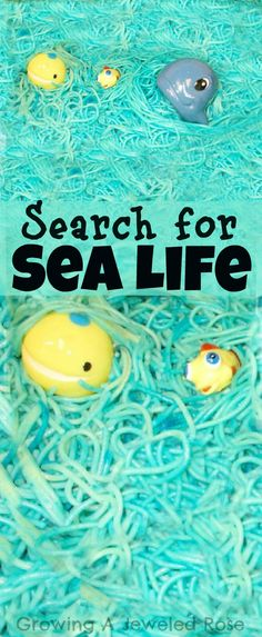 Growing A Jeweled Rose: Setting the Stage for Group Sensory Play. Search for Sea Life