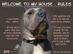 Pit bull love                                                                                                                                                                                 More