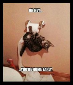 Home early * cat * toilet paper