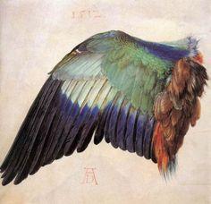 Durer bird's wing
