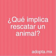 ¿Qué implica rescatar a un animal? | Adopta.mx