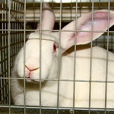 Tell Hennepin County Medical Center: Stop Harming Rabbits and Sheep