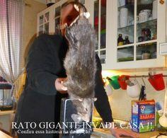 DEDETIZADORA TSERV : Rato GIGANTE invade casa ! tserv.com.br