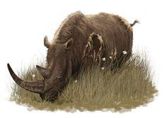 Wooly Rhino - Dionisio Álvarez