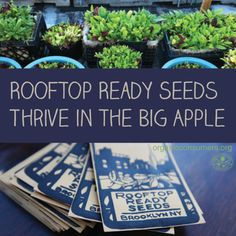 """We're the first seed company with an urban focus. Cultivating seeds that will work here and sharing them--it's a direct, intimate link with people."" Check out the Rooftop Ready Seed project which caters to the rapidly growing urban agricultural movement: http://orgcns.org/199Ng2G #UrbanGardening #Gardening"