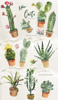 Cacti - watercolor clipart collection of pretty cactuses, succulents and green plants. All are high resolution watercolor illustrations on transparent background. Watercolor Succulents, Watercolor Cactus, Cacti And Succulents, Watercolor Print, Watercolor Illustration, Potted Plants, Graphic Illustration, Watercolor Paintings, Green Plants