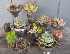 Girasole Sonoma- assorted containers, assorted succulents. Design ideas for an event.