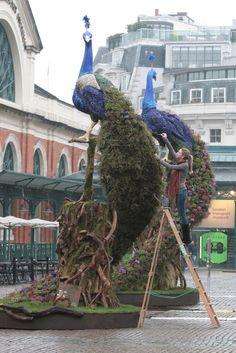 oh, to be Preston Bailey  Peacock made of flowers!