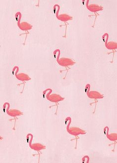 Maya Pletscher - Flamingos