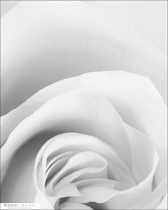 White rose | photography black & white . Schwarz-Weiß-Fotografie . photographie noir et blanc | Photo: Bobby Samat |