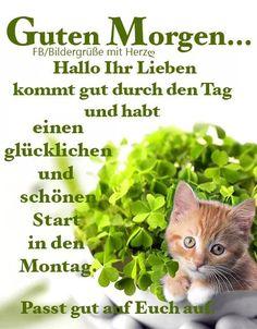 Good Morning Sunshine, Good Night, Herbs, Petra, Happy Birthday, Good Morning Monday Images, Morning Sayings, Good Mood, New Week