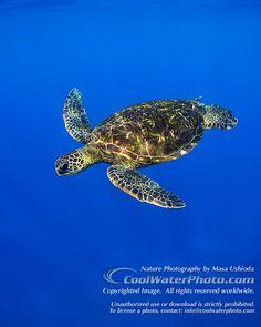 My trip to the Riviera Maya - Green Marine Se Turtles
