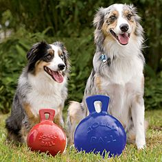 Jolly Ball for Dogs - Dog Toys, Treats