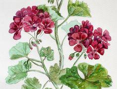 Acquerello pittura floreale rosa Pelargonium di KseniyaFineART