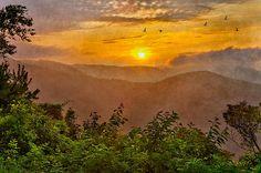 Birds soaring before sunrise at Doughton Park on the Blue Ridge Parkway in North Carolina.  Dan Carmichael.