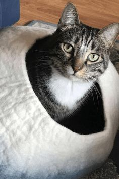 I Love Cats, Crazy Cats, Cute Cats, Cat Hacks, Cat Cave, Cute Animals, Baby Animals, Here Kitty Kitty, Pet Accessories
