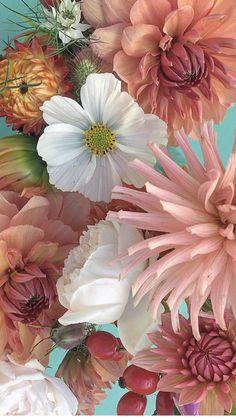 Flower Iphone Wallpaper, Pretty Phone Wallpaper, Iphone Background Wallpaper, Scenery Wallpaper, Wallpaper Pictures, Aesthetic Iphone Wallpaper, Flower Wallpaper, Beautiful Flowers Photos, Flower Photos