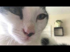 KITTENS - YouTube Cats Of Instagram, Instagram Posts, Dog Cat, Kittens, Pets, Youtube, Action, Animals, White Cats