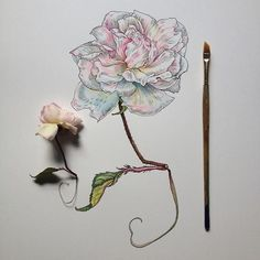 Scientific illustrator and artist Noel Badges Pugh has an incredible knack for drawing flora and fauna