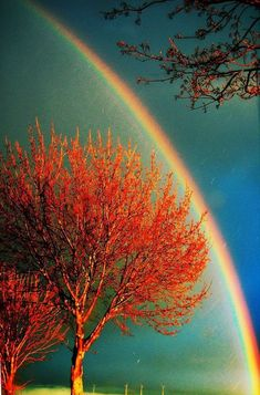 And a rainbow bursts into view ~