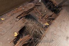 Stukje vloer... Monument fotograaf Brummen