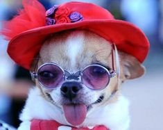 """""""When I am an old lady, I shall wear purple, with a red hat that doesn't go. . """"  This picture made me laugh. :)"""