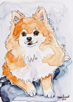 CUSTOM PET PORTRAITS / MIXED MEDIA SKETCHES ON YUPO PAPER/ DOGS/POMERANIANS - 'Prissy' - 5 x 7 mixed media sketch on YUPO paper, watercolor with pen and ink by Shaina Kay Stinard - Artist www.shainastinardartist.com  Making your photos a work of art!