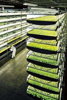 Hydroponics AeroFarms' indoor farm grows crops twice as fast as outside while using 95 percent less water - AeroFarms' New Jersey HQ grows crops up to the ceiling using aeroponic mists and LEDs, Marc Oshima explains Indoor Farming, Hydroponic Farming, Backyard Aquaponics, Hydroponic Growing, Aquaponics Plants, Indoor Gardening, Kitchen Gardening, Growing Plants, Gardening Tips