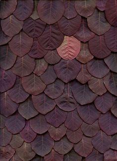burgundy leaves
