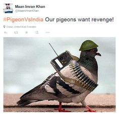 The news of a pigeon detained in India on suspicion of being used to spy for Pakistan was met with amusement on both sides of the border - and encouraged Pakistanis to share memes and jokes making fun of their neighbours.