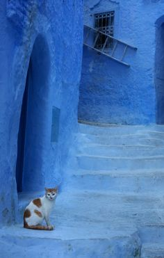 Kitty in The Blue City of Chefchaouen, Morocco ~  James Clear Love the blues in this photo