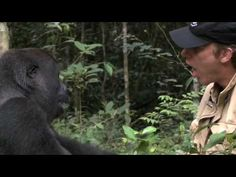 MAN & GORILLA REUNITED after 10 years very touching