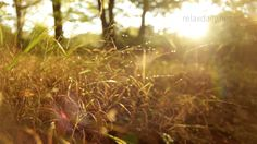 Beautiful Slow Instrumental -- music for studying, background, healing, ...