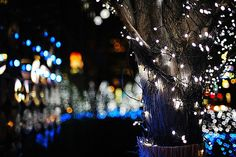 "2000/1713*- by june1777, via Flickr. Example of ""Bokeh"" Photography."