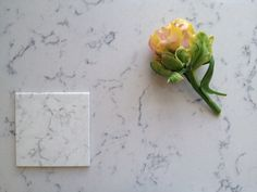 Sample of Silestone Blanco Orion and our final choise, Silestone Lyra. And a tulip.