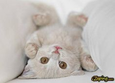 Cat up side down <3