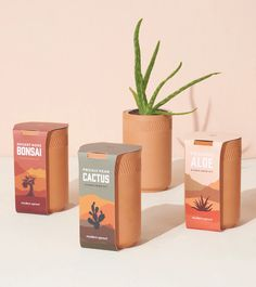 modern jar hydroponic planter - Google Search Cactus Seeds, Bonsai Seeds, Grow Kit, Prickly Pear Cactus, Hydroponics System, Pots, Self Watering, Terracotta, Aloe
