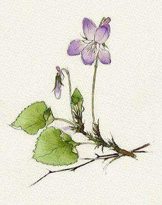 日本水彩花卉