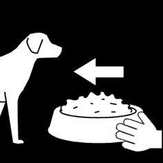 hond eten geven