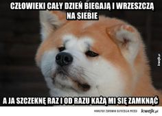 Funny friday jokes with pictures archives - hilarious pets pictures Funny Dog Memes, Funny Animal Memes, Funny Animal Pictures, Funny Animals, Cute Animals, Funny Quotes, Animal Pics, Funny Shit, Funny Stuff
