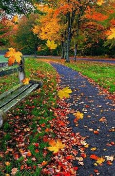 Good morning beautiful world🕊🕊🕊 Fall Pictures, Nature Pictures, Fall Photos, Beautiful World, Beautiful Images, Beautiful Roads, Simply Beautiful, Autumn Scenes, Seasons Of The Year